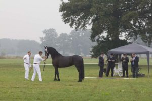 friesian, inspection, studbook, keuring, friesian mare
